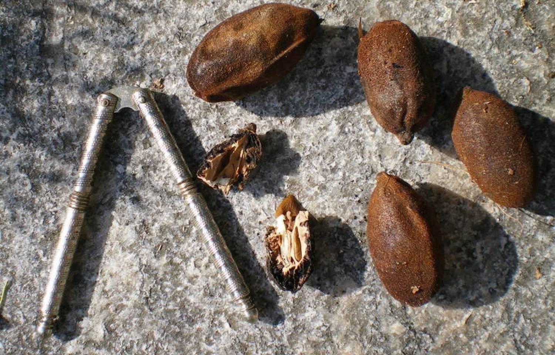 Орех серый