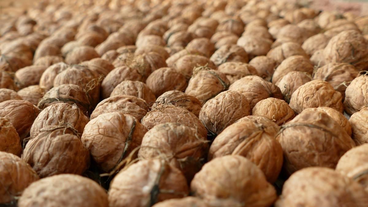 Мраморные клопы наступают: фермеры грузии бьют тревогу — портал ореховод