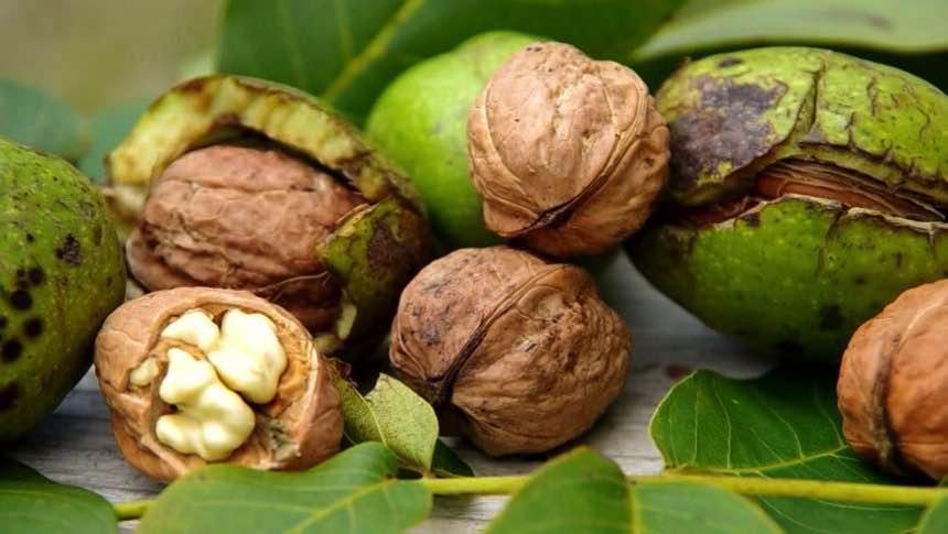 Почему грецкие орехи черные внутри