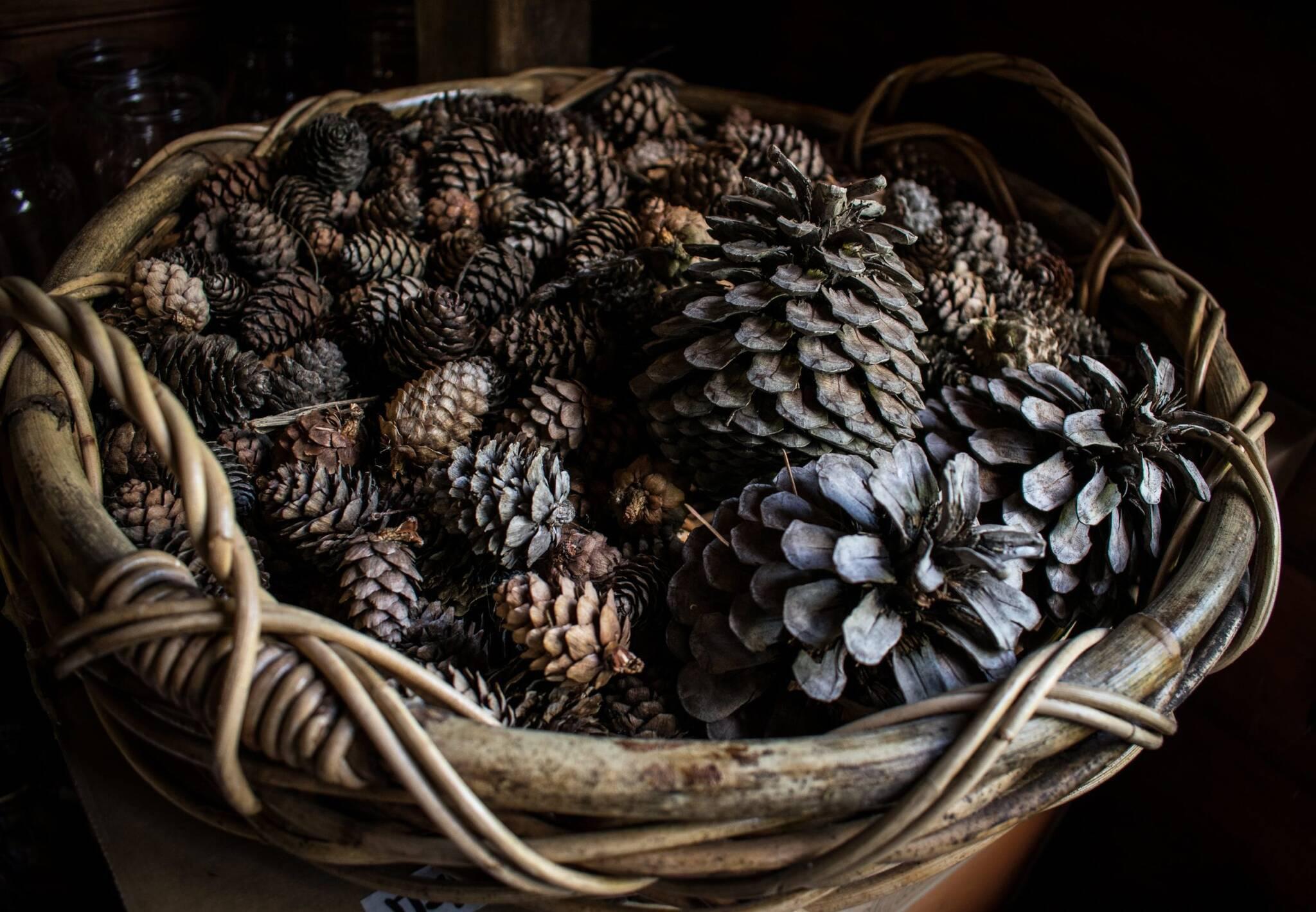 Кедровые орехи шишки