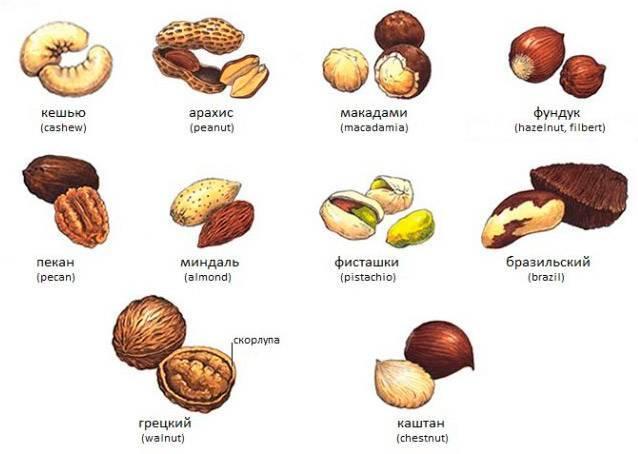 Виды орехов и их названия