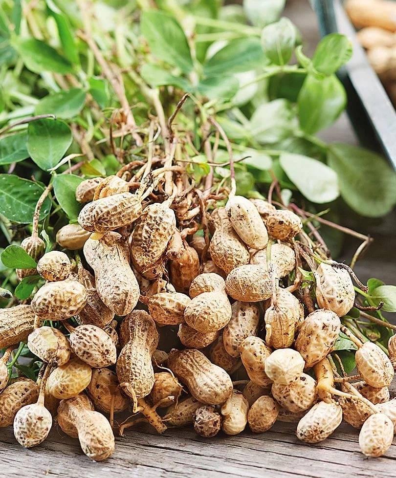 Об арахисе: описание, состав, применение
