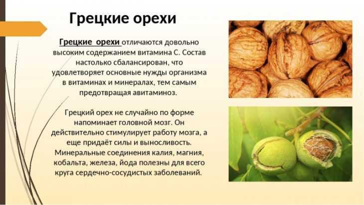 Масло макадамии: полезные свойства, применение, состав