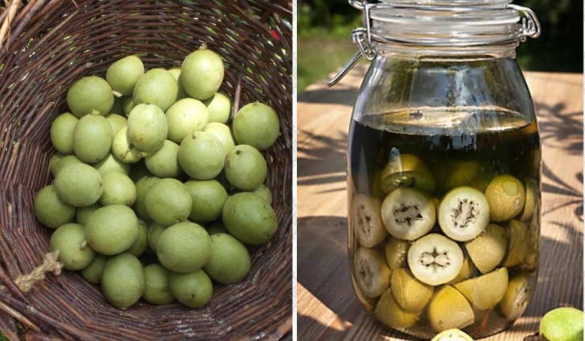 Листья грецкого ореха: лечебные свойства, противопоказания, вред организму человека, и как принимать полезный чай, что содержится в молодых зеленых побегах дерева?