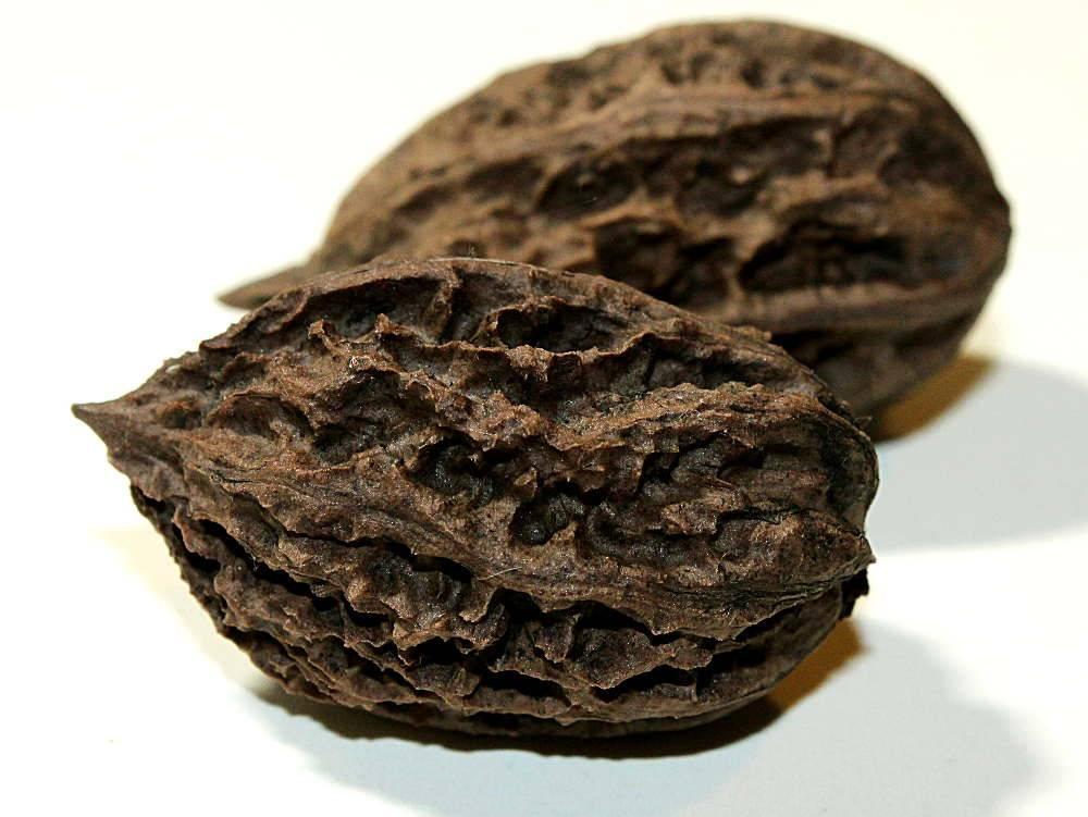 Маньчжурский орех – полезные свойства, применение