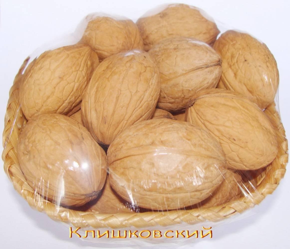 Лучшие сорта грецкого ореха: морозоустойчивые, скороплодные, крупные