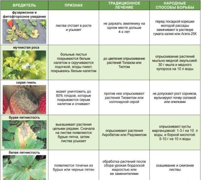 Миндаль десертный описание сорта - клуб органического земледелия