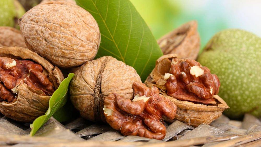 В копилку огородникам: описание сорта грецкого ореха «астаховский» и рекомендации по выращиванию