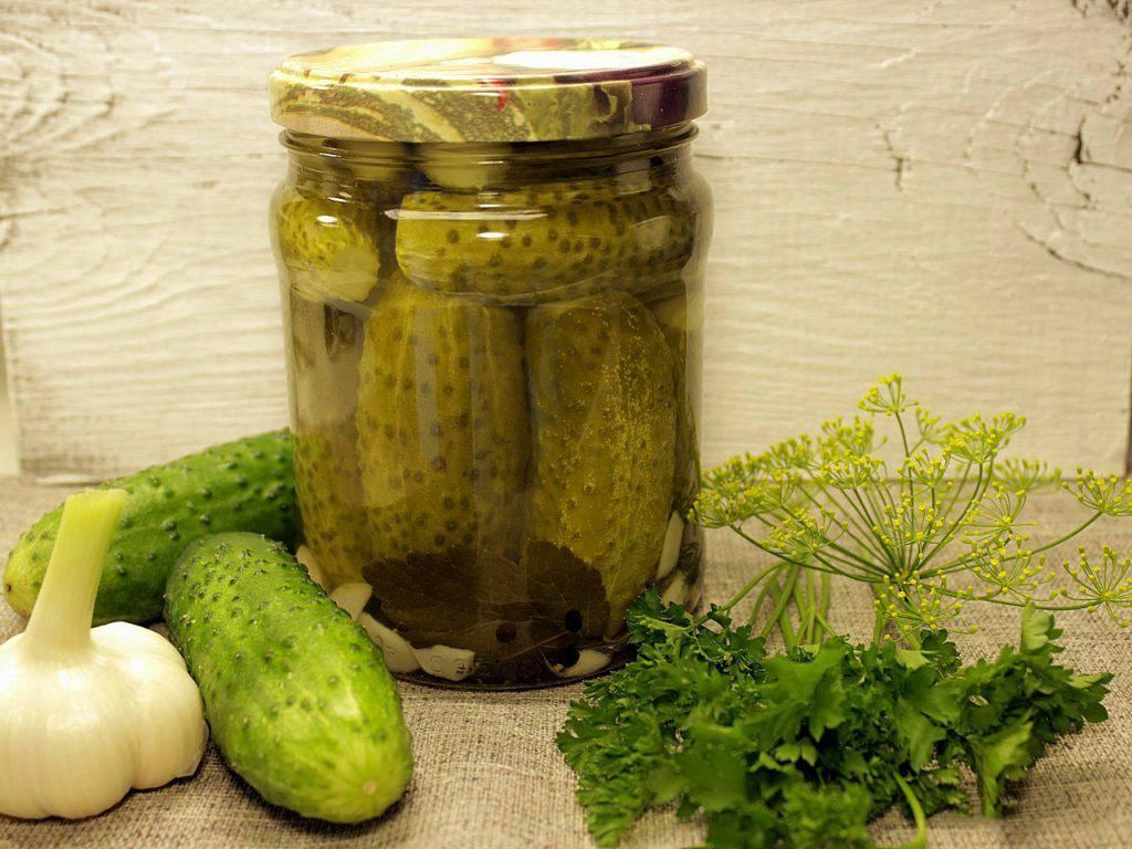 Засолка огурцов на зиму: рецепты соленых хрустящих огурцов