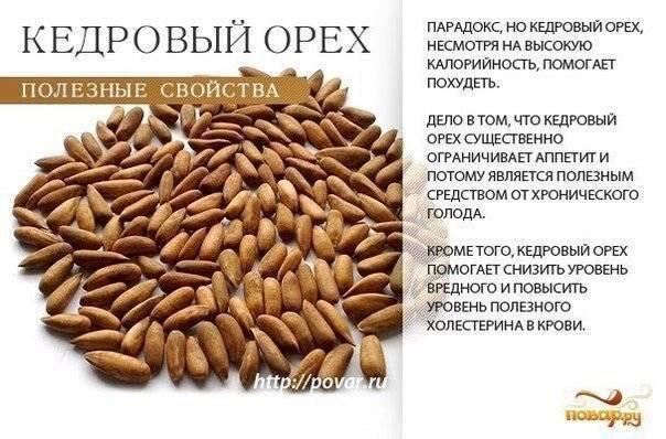 Польза и вред для здоровья кедровых орешков: влияние на организм мужчин и женщин, применение масла