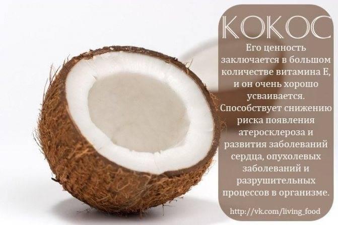 Кокос: польза и вред