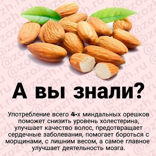 Миндаль: польза и вред продукта, целебные вещества и их предназначение для человеческого организма