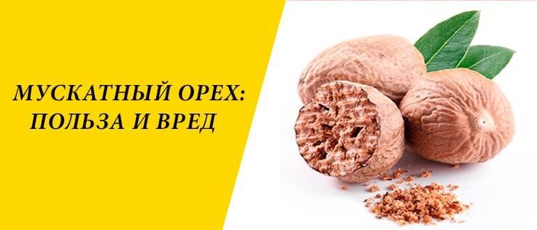 Противопоказания к употреблению мускатного ореха: есть ли польза?