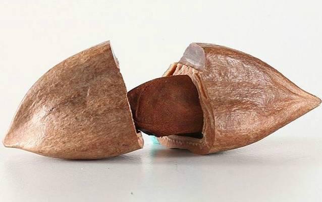 Орехи пекан: польза и вред для организма человека