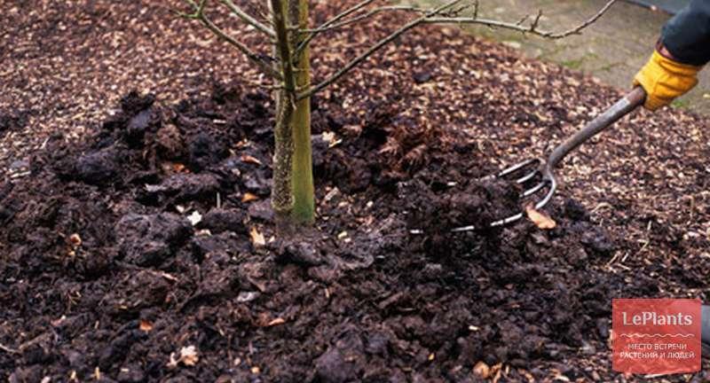 Удобрение деревьев и кустарников: весной, осенью и летом; суть, расчет и внесение подкормок
