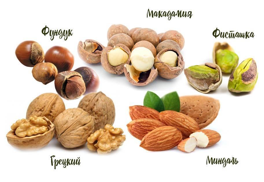 Масло лесного ореха (фундука): состав, свойства. масло лесного ореха в косметологии и кулинарии: рецепты