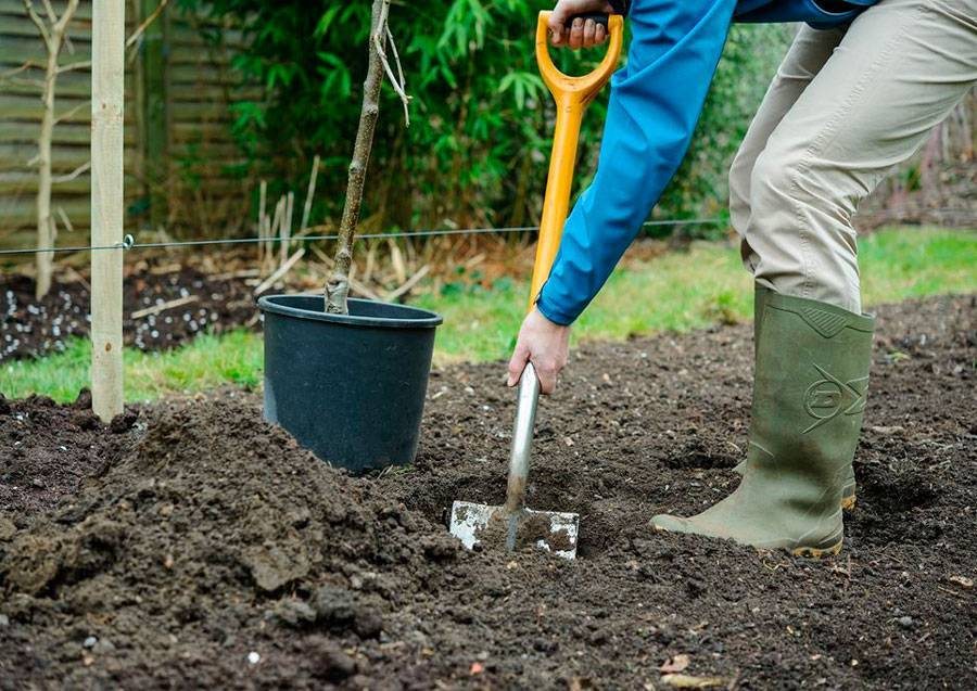 Как разбить сад на участке: подготовка почвы и посадка деревьев
