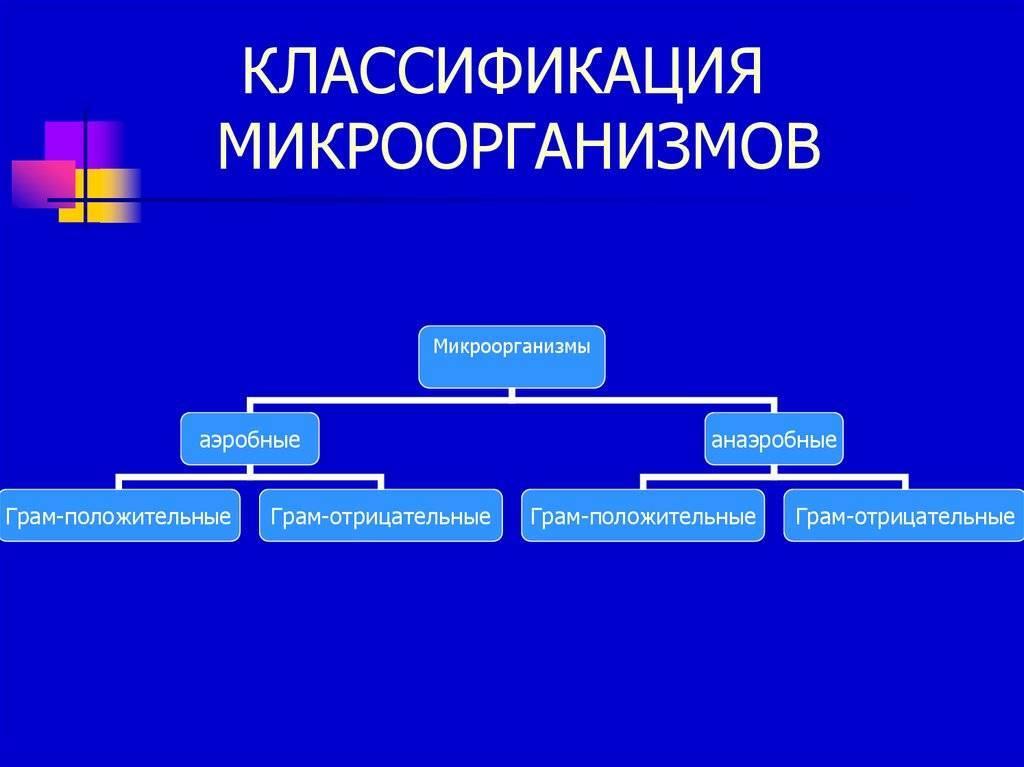 2.систематика и номенклатура микроорганизмов. микробиология: конспект лекций