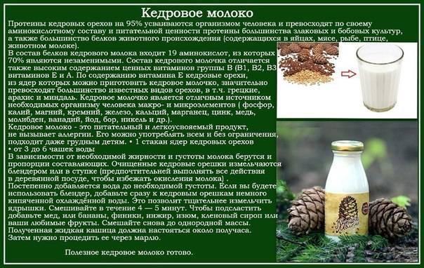 Кедровое молочко - для здоровья и красоты