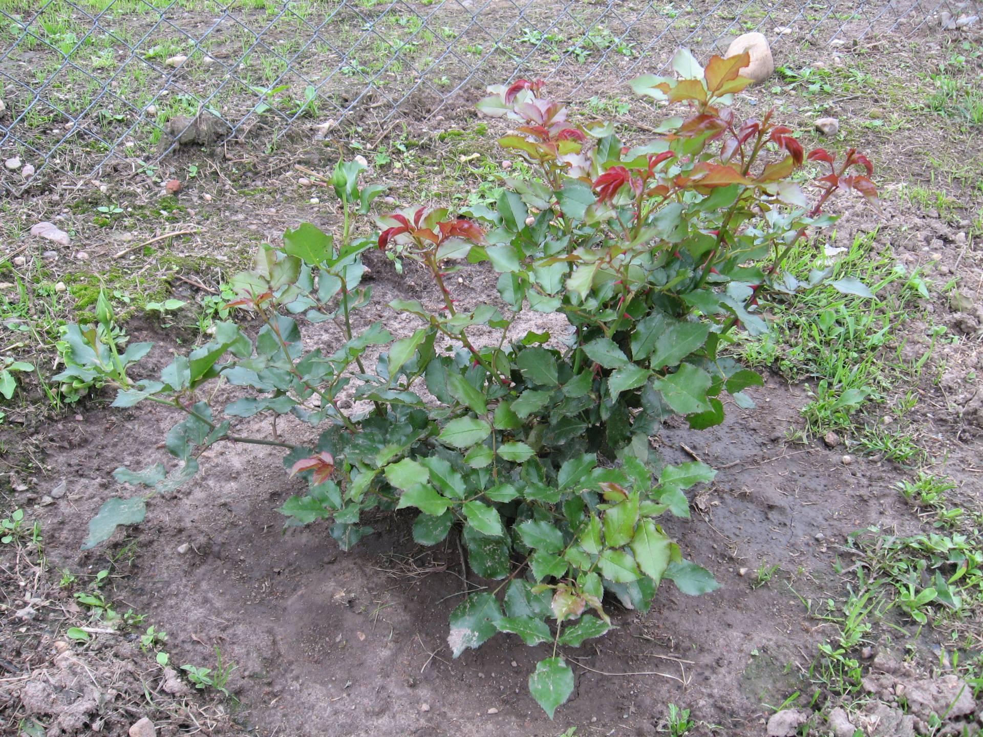 Что посадить под деревьями: цветы, растения, овощи? +отзывы