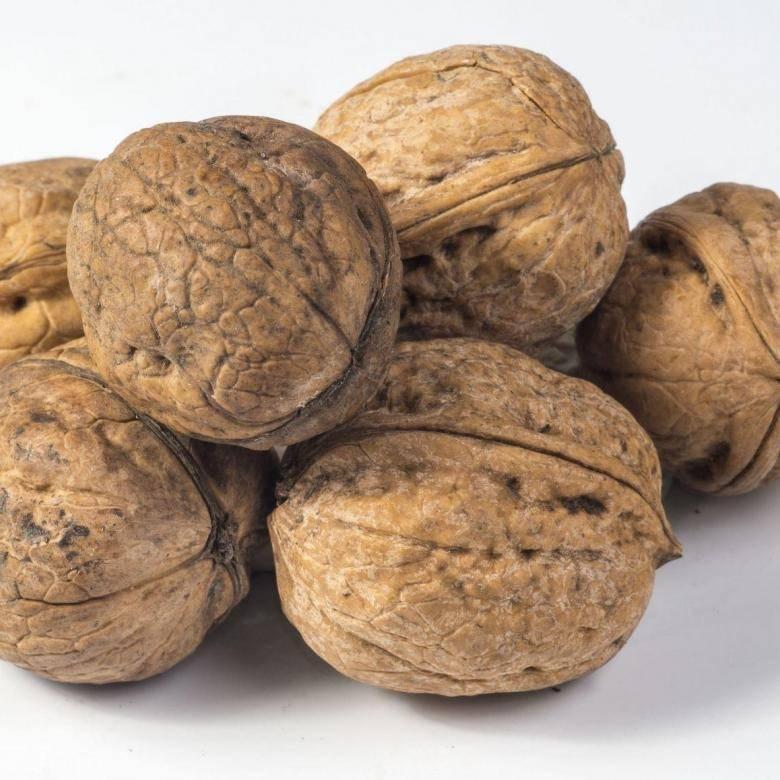 Нет ни одного сорта грецкого ореха, выведенного селекционным путем