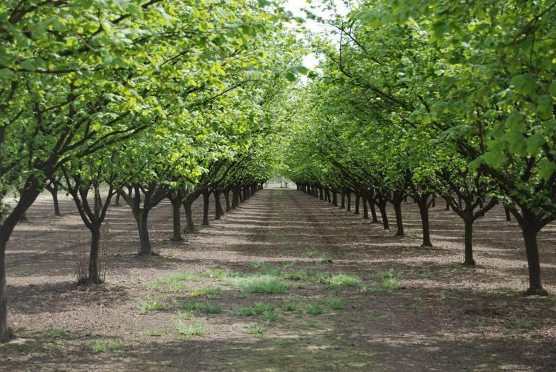 Комплексная защита сада от вредителей и болезней
