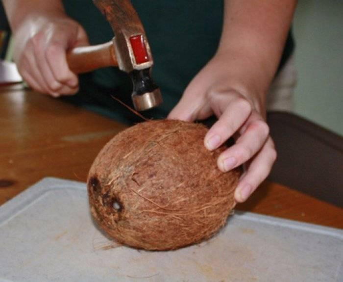 Как открыть орех макадамия специальным ключом и чем правильно чистить орешек в домашних условиях: можно ли разбить и есть ли способ расколоть скорлупу без прорези?
