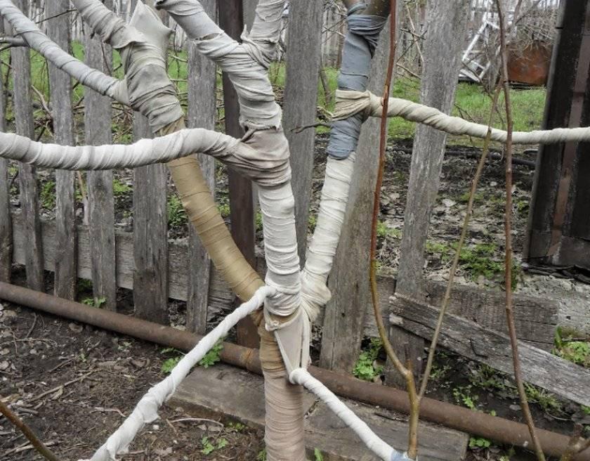 Как утеплять деревья на зиму — подготовка фруктовых деревьев к холодам | вокругсада.ру