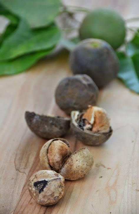 Похудение на орехах кукуй. свечной орех: польза ореха кукуй. лечение сахарного диабета