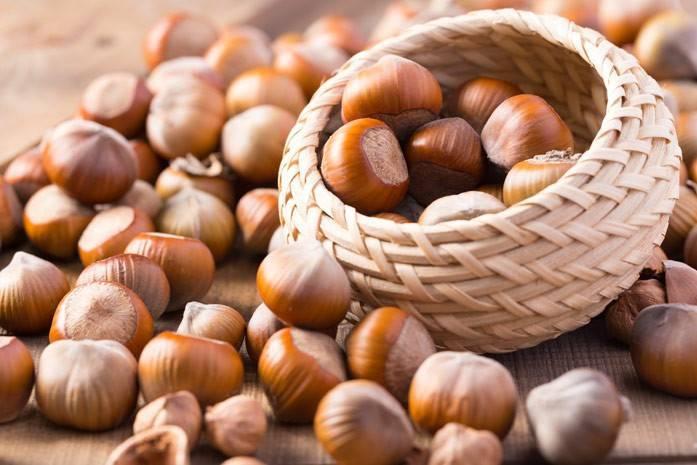 Орех фундук — полезные свойства и противопоказания