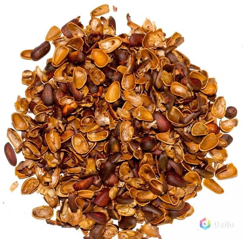 Скорлупа кедрового ореха: польза, вред и применение