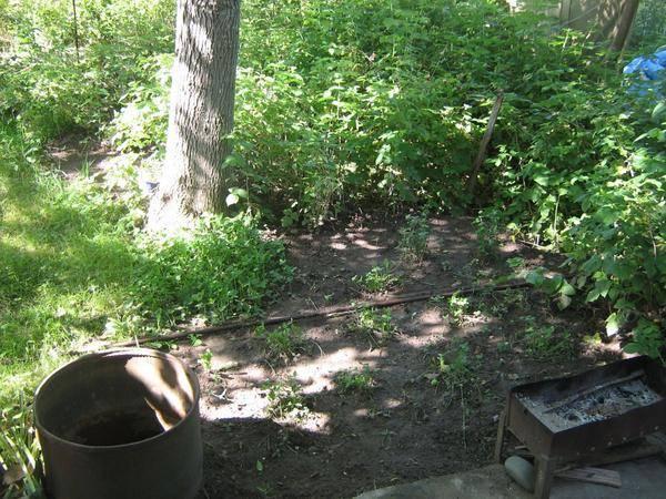 Что посадить рядом с туей: растения «можно» и «нельзя», скетчи и фото готовых клумб