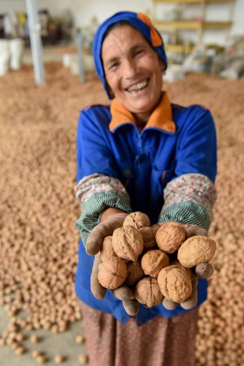 Есть кедровые орешки: как правильно в скорлупе выбрать, нужно ли мыть или замачивать, сколько орехов можно съедать в день взрослому человеку, и суточная норма