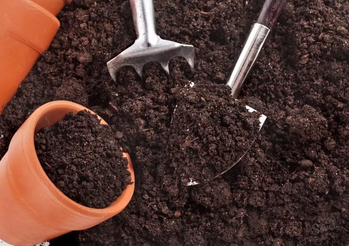 Особенности выращивания грецкого ореха из семени и саженца