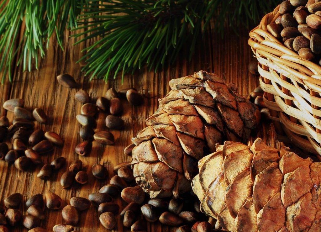 Сонник: орехи