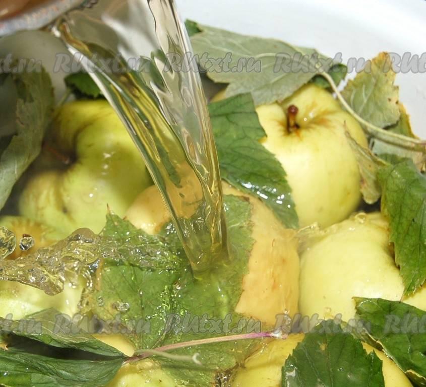 Моченые яблоки антоновки – еще один способ сохранить урожай любимых фруктов. подборка рецептов моченых яблок антоновки - автор екатерина данилова - журнал женское мнение