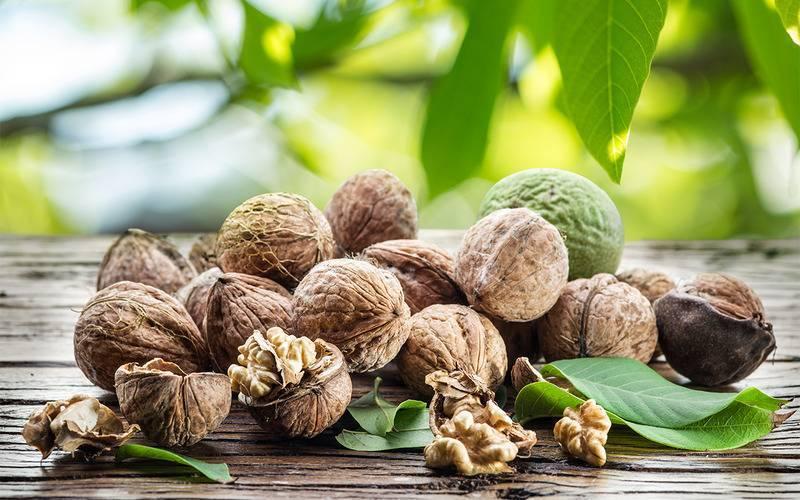 Зеленый грецкий орех: полезные свойства и противопоказания