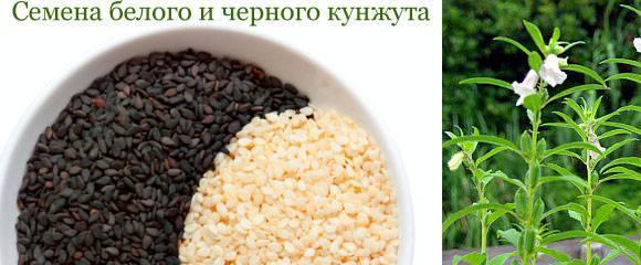 Кунжутные семечки: польза, вред, правила употребления