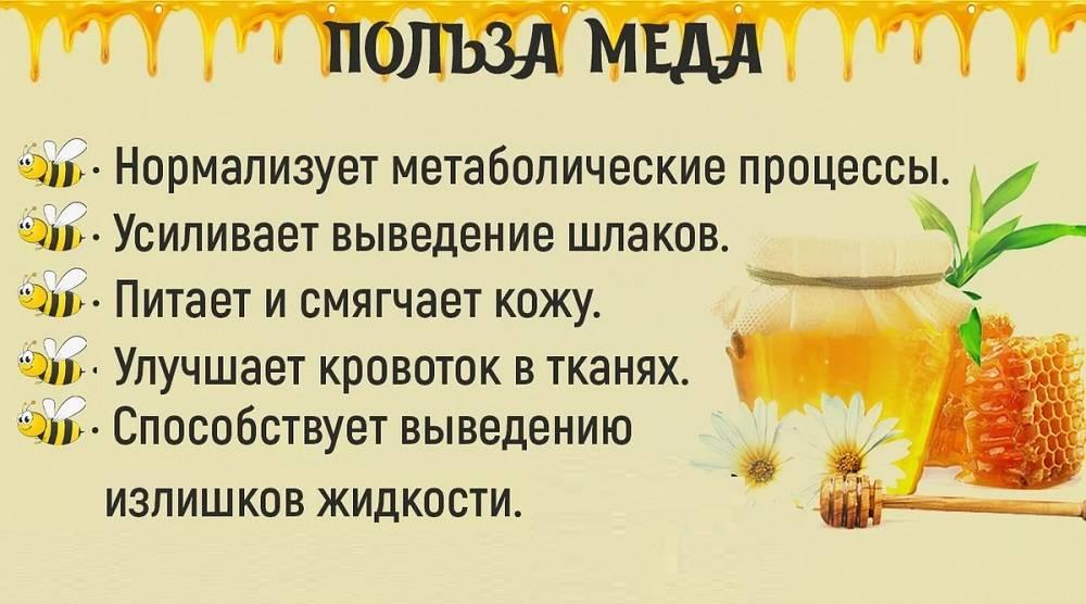 Мёд: польза и вред для организма