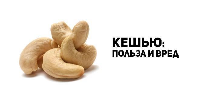 Орех кешью – польза и вред: 8 полезных свойств и противопоказания