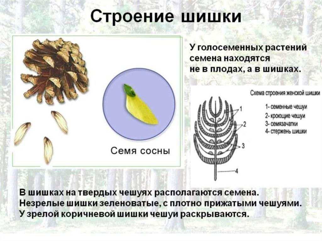 Как правильно выбрать участок под сад фундука — портал ореховод