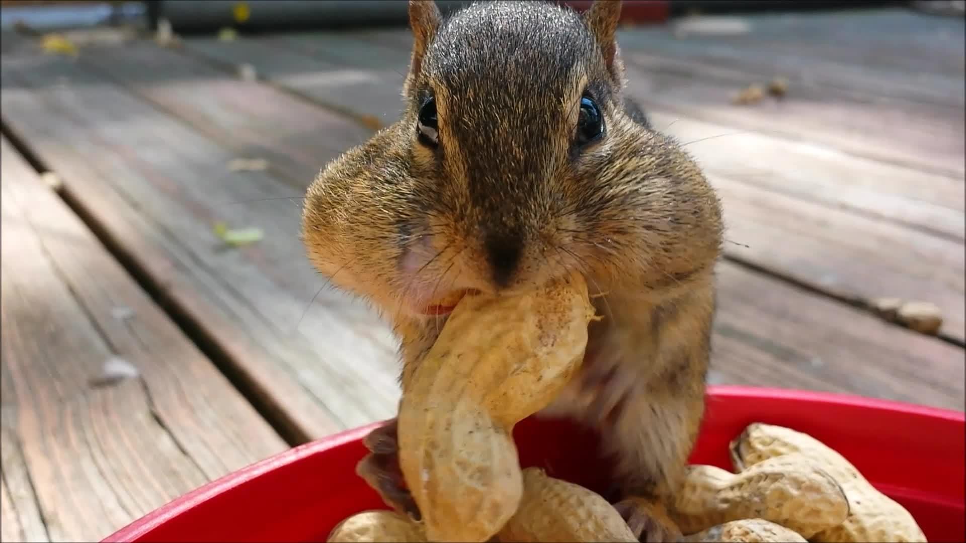 Есть, но не переедать. за что мы любим орехи? - будьте здоровы! - медиаплатформа миртесен