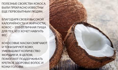 Польза кокоса: 115 фото кокоса, польза, вред, показания и противопоказания