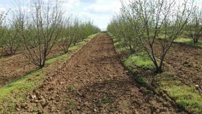 Выращивание фундука на даче: посадка саженца и уход в открытом грунте