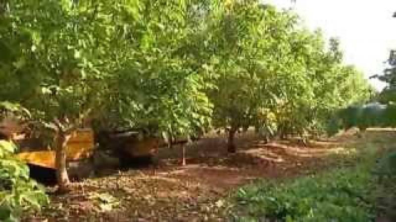 Грецкий орех Интенсивный сад