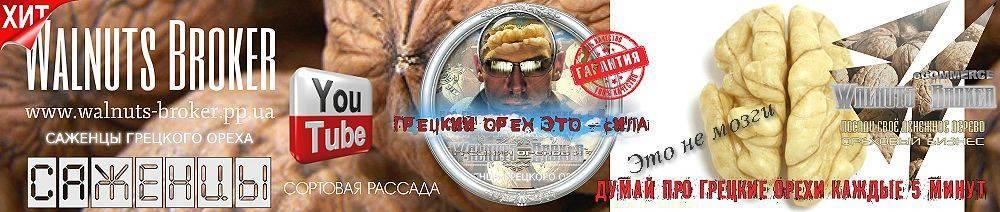 Кто в украине зарабатывает на грецких орехах — портал ореховод