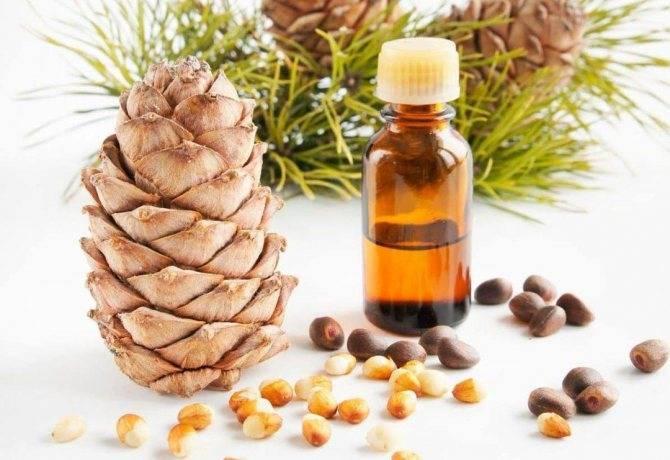 Кедровое масло для волос: польза и применение, рецепты масок