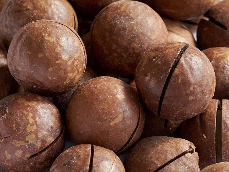 Премиальный орех макадамия: полезные свойства, вкус, аромат и противопоказания