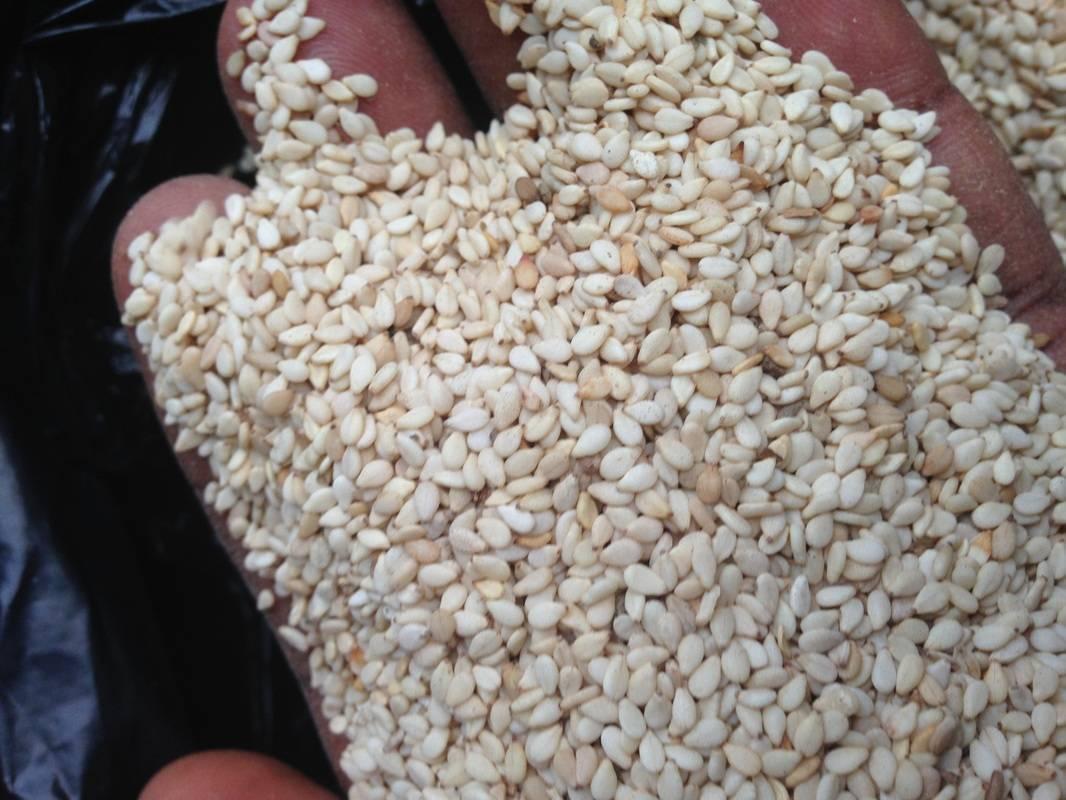 Кунжут: полезные свойства, выращивание, виды кунжута. — cельхозпортал