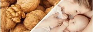 Грецкие орехи при грудном вскармливании для жирности молока: можно ли есть в первый месяц после родов, сколько кушать и польза для кормящей мамы и новорожденного